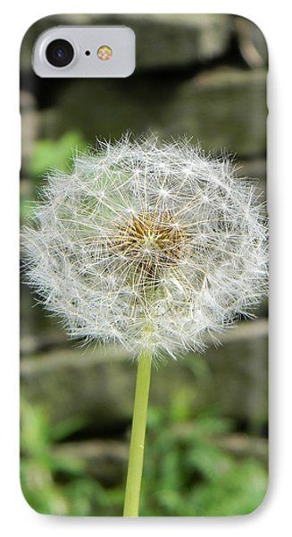 Gone To Seed IPhone Case by Jean Goodwin Brooks
