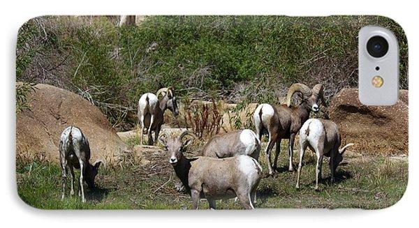 Good Bye Bighorn Sheep IPhone Case by Renee Sinatra