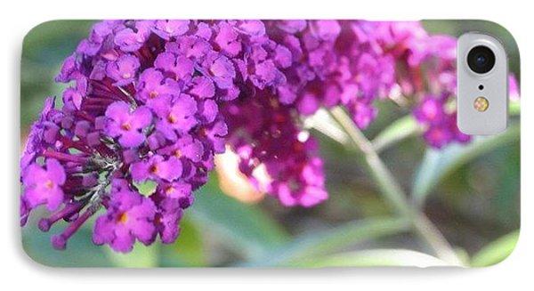 Good Morning Purple Butterfly Bush IPhone Case