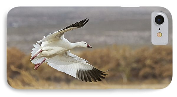 Goose Above The Corn IPhone Case by Ruth Jolly