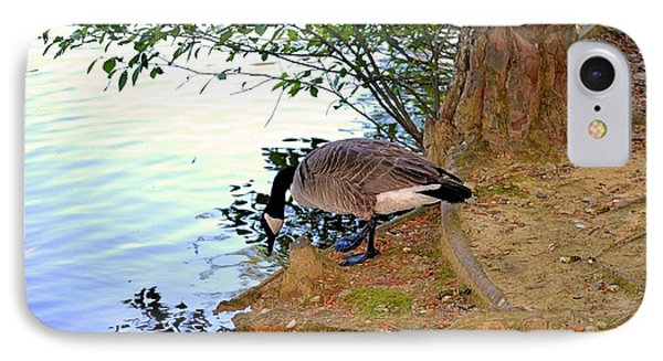 Goose Drinking From A Pond IPhone Case