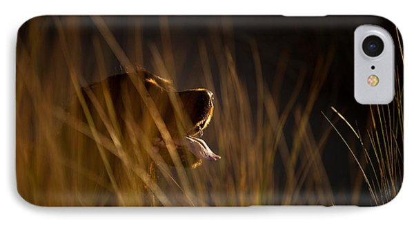 Gordon Setter Highlights IPhone Case by Izzy Standbridge