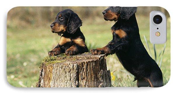 Gordon Setter Puppy Dogs IPhone Case