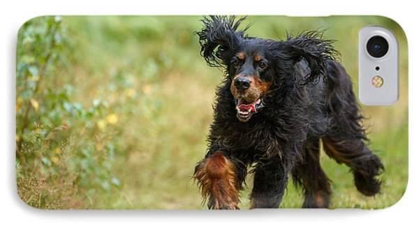 Gordon Setter Running In Grass IPhone Case by Izzy Standbridge