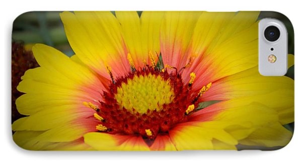 Gorgeous Daisy Phone Case by Chalet Roome-Rigdon