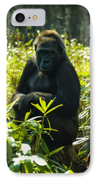 Gorilla Sitting On A Stump IPhone Case by Chris Flees
