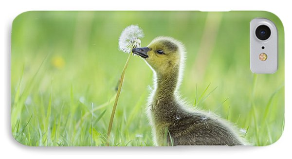 Gosling With Dandelion IPhone Case by Mircea Costina Photography