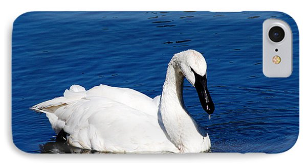 Graceful Swan Phone Case by Rebecca Cozart