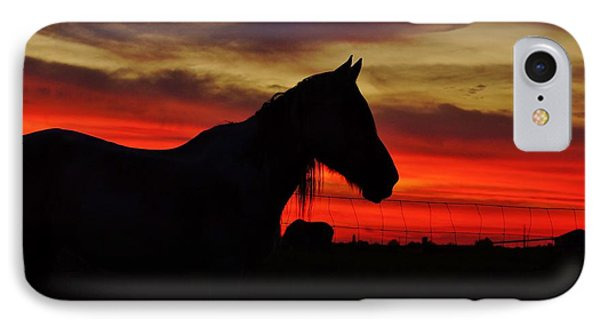 Gracie At Sunset IPhone Case by Lynda Dawson-Youngclaus