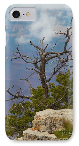 IPhone Case featuring the photograph Grand Canyon Tree by Rod Wiens