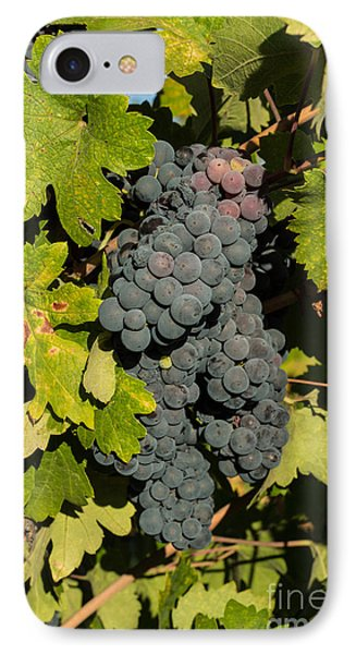 Grape Harvest IPhone Case by Suzanne Luft