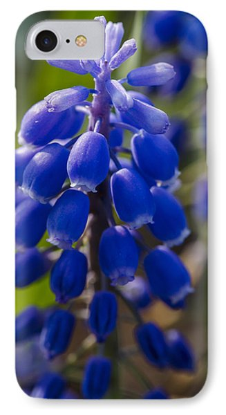 Grape Hyacinth IPhone Case by Adam Romanowicz