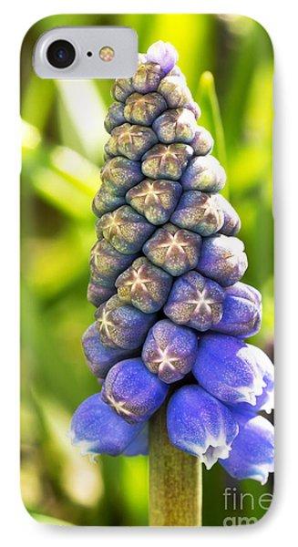 Grape Hyacinth Closeup Phone Case by Jane Rix