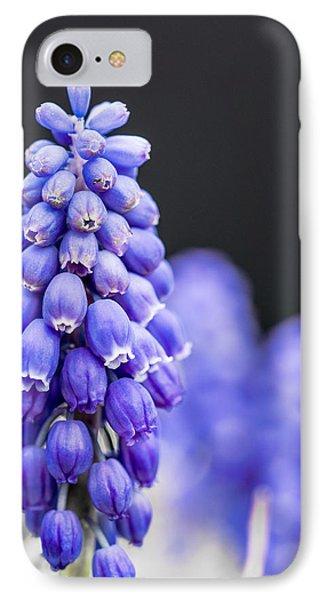 Grape Hyacinth IPhone Case by Jon Woodhams