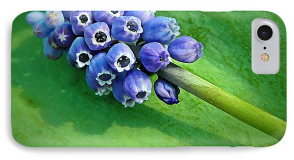 Grape Hyacinth Spike  Phone Case by Chris Berry