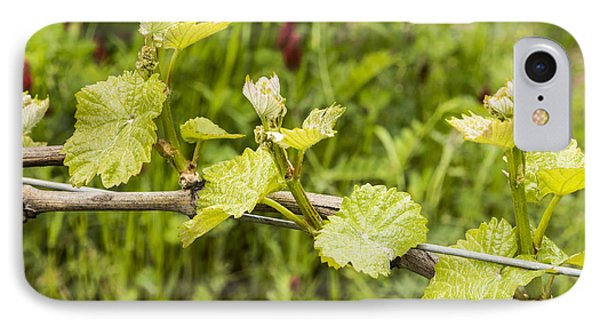 Grape Leaves In Early Spring IPhone Case by Jean Noren
