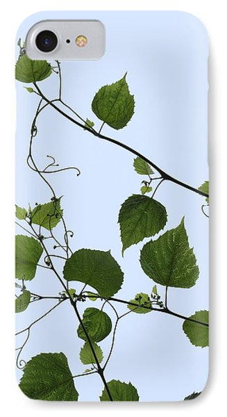 Grape Vine And Sky IPhone Case by Daniel Reed