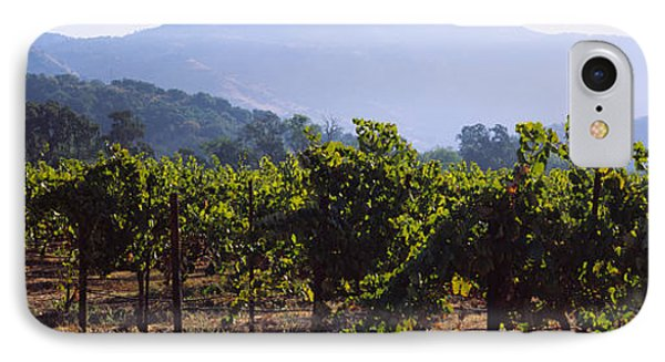 Grape Vines In A Vineyard, Napa Valley IPhone Case by Panoramic Images