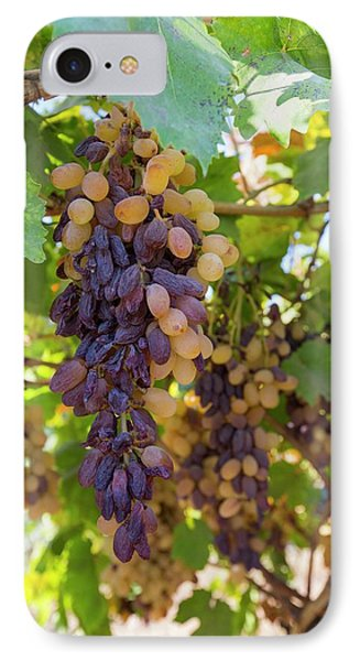 Grapes Growing In Bakersfield IPhone Case