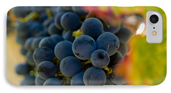 Grapes On The Vine Phone Case by Bill Gallagher