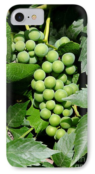 Grapes On The Vine Phone Case by Carol Groenen