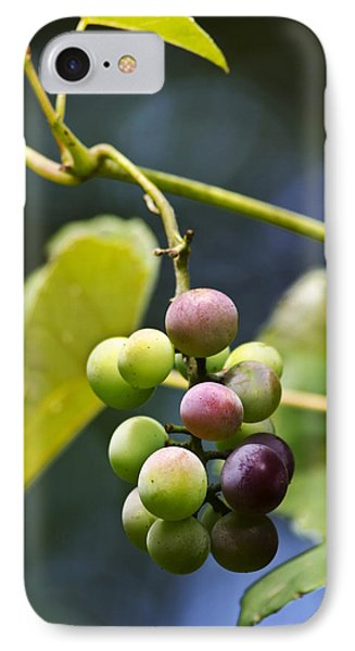 Grapes On The Vine Phone Case by Christina Rollo