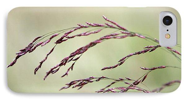 Grass Seed IPhone Case by Leeon Pezok