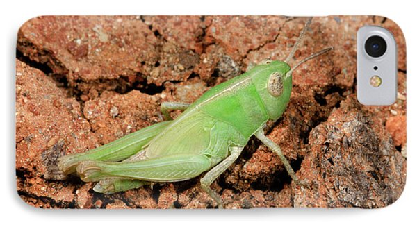 Grasshopper Aiolopus Strepens Nymph IPhone 7 Case by Nigel Downer
