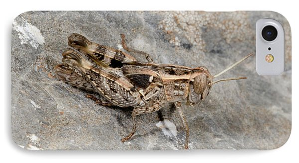 Grasshopper Calliptamus Barbarus Juvenile IPhone 7 Case by Nigel Downer