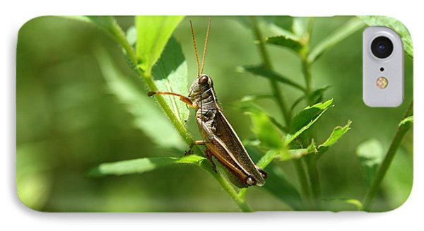 Grasshopper Climb Phone Case by Neal Eslinger
