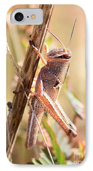 Grasshopper In The Marsh IPhone 7 Case by Carol Groenen