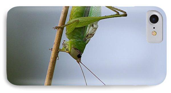 Grasshopper IPhone Case by Anne Rodkin