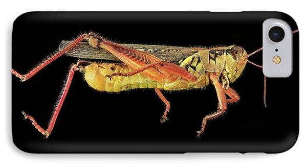 Grasshopper iPhone 7 Case - Grasshopper by Us Geological Survey