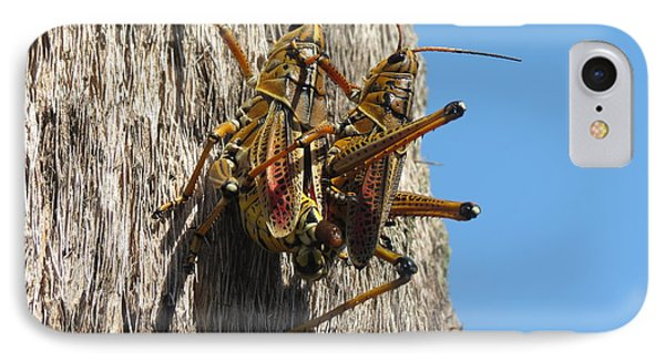 Grasshoppers IPhone Case by Fortunate Findings Shirley Dickerson