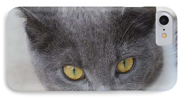 Gray Cat - Listening IPhone Case