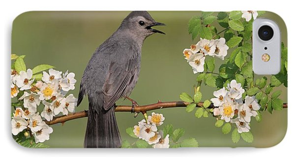 Gray Catbird Calling Phone Case by Daniel Behm
