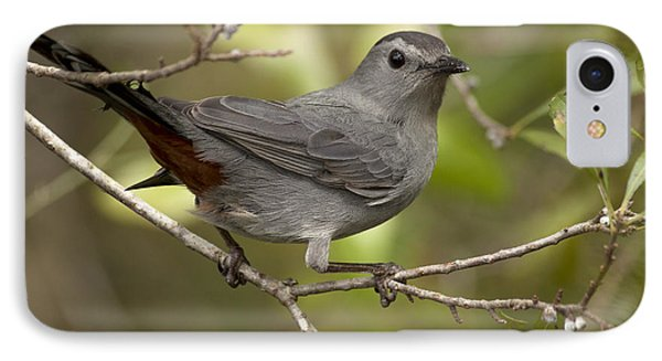 IPhone Case featuring the photograph Gray Catbird by Meg Rousher