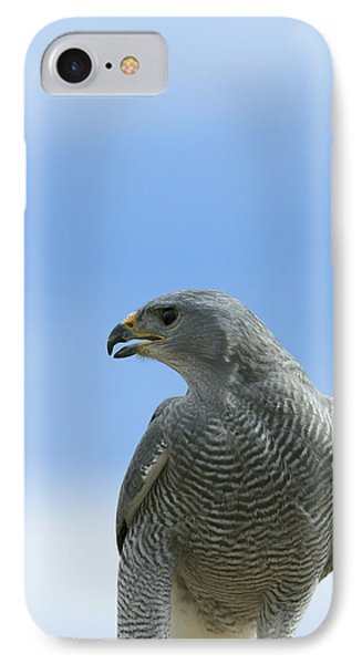 Grey Hawk IPhone Case by Phill Doherty