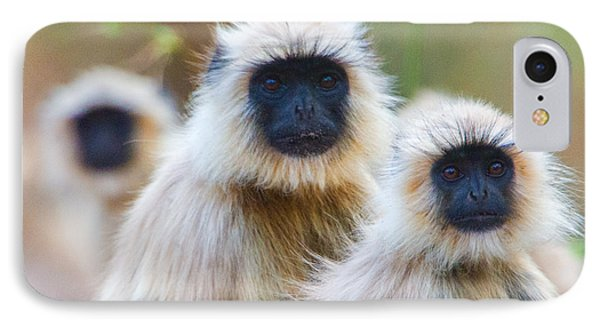 Gray Langur Monkeys, Kanha National IPhone Case by Panoramic Images