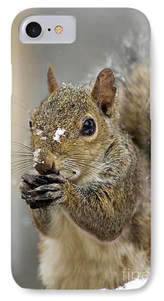 Gray Squirrel - D008392  Phone Case by Daniel Dempster