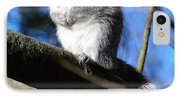 Gray Squirrel IPhone Case by Kathy Eickenberg