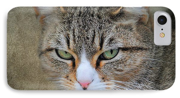Gray Tabby Cat IPhone Case by Jai Johnson