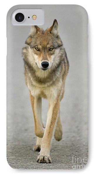 Gray Wolf Denali National Park Alaska IPhone 7 Case