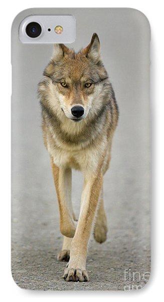 Gray Wolf Denali National Park Alaska IPhone Case by Yva Momatiuk John Eastcott