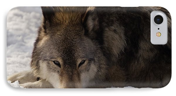 Gray Wolf In Snow IPhone Case