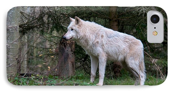 Gray Wolf White Morph Phone Case by Mark Newman