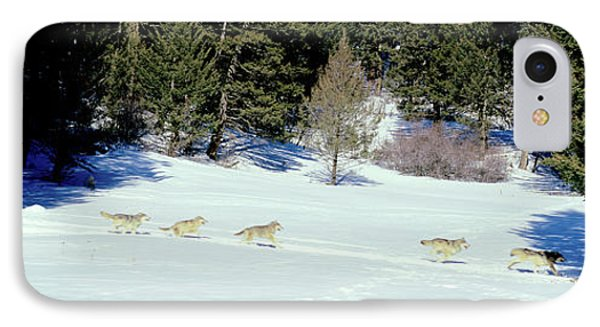 Gray Wolves Canis Lupus Running IPhone Case by Panoramic Images