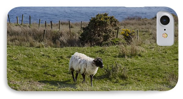 Grazing By The Sea IPhone Case by Bill Cannon