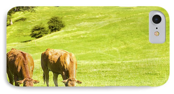 Grazing Cows Phone Case by Amanda Elwell