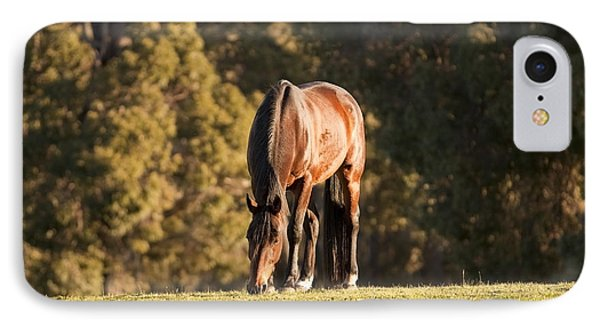 Grazing Horse At Sunset Phone Case by Michelle Wrighton
